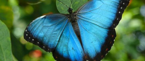 Créer l'effet papillon : une cause infime peut avoir de grands effets